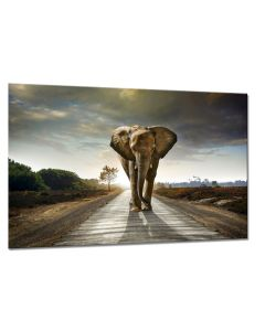 Tavla Canvas 75x100 Elephant