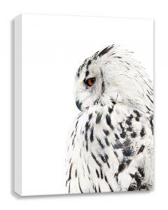 Tavla Canvas 50x70 Owl