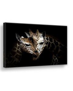 Tavla Canvas 75x100 Wild Giraffes