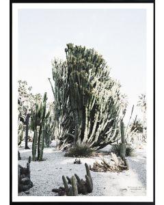 Poster 50x70 Patricija Dacic Cactus