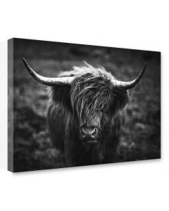 Tavla Canvas 75x100 Highland Horns