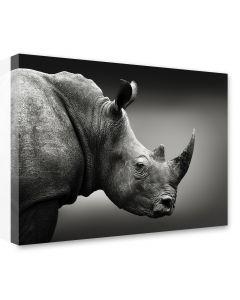 Tavla Canvas 75x100 Rhino