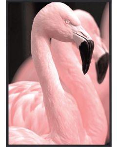 Poster 30x40 Pink Flamingo 2 (planpackad)