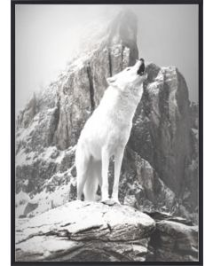 Poster 30x40 B&W White Wolf (planpackad)