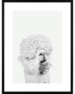 Poster 50x70 Light Alpaca (planpackad)