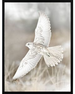 Poster 30x40 Nature Wings (planpackad)