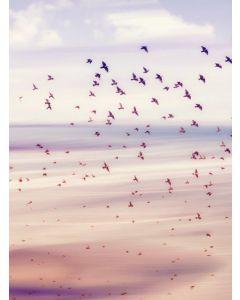Poster 30x40 Pink Birds (planpackad)