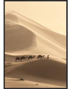 Poster 30x40 Desert Camels (Planpackad)