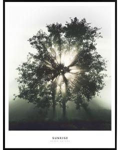 Poster 50x70 Green Nature Sunrise (planpackad)