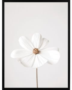Poster 30x40 Nature White Flower