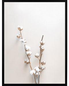 Poster 50x70 Beige Cotton plant