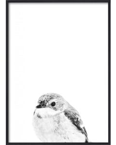 Poster 30x40 B&W Little Bird (planpackad)