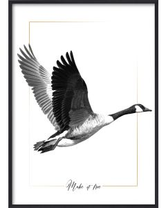 Poster 30x40 B&W Flying goose (planpackad)