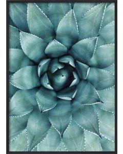Poster 50x70 Green Cactus (Planpackad)