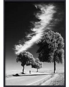 Poster 50x70 B&W Desert Road (Planpackad)