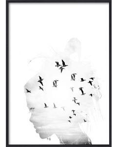 Poster 50x70 B&W Bird Head (Planpackad)