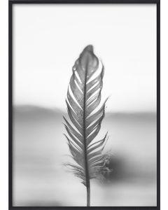 Poster 50x70 B&W Feather (Planpackad)