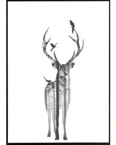 Poster 50x70 B&W Hjort (planpackad)