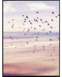 Tavla med ram 50x70 N50 Flyttfåglar