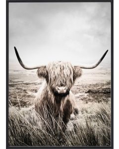 Poster 50x70 Nature Highland Cattle (planpackad)