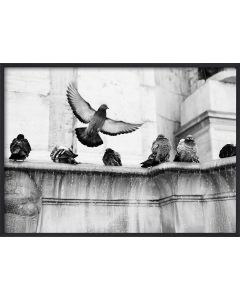 Poster 42x59,4 A2 Fountain Birds