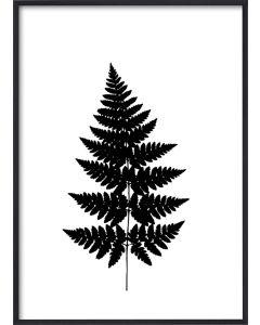 Poster 50x70 V11 Växt (planpackad)