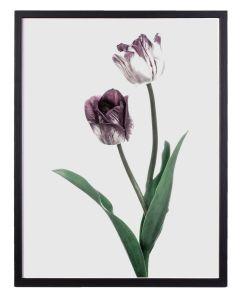 Poster 30x40 Purple Tulip No 10 (planpackad)