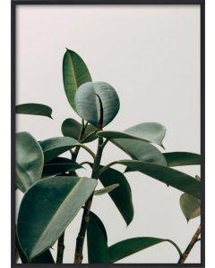 Poster 50x70 Green Plant (Planpackad)